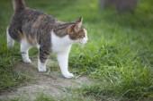 Walking cat — Stock Photo