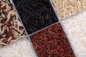 Rice in a containers — Stock Photo