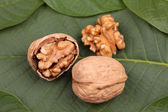 Walnuts lying on the leaf — Stock Photo