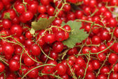 Organic red currants — Stock Photo
