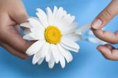 Young girl with a white daisy tearing petals off — Stock Photo