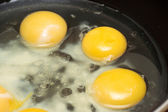 Egg yolks — Stock Photo