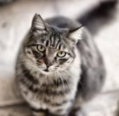 Portrait of Cat — Stock Photo
