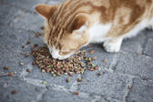 Abandoned street cat eating food — Stock Photo