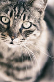Portrait of Cat — Stock Photo