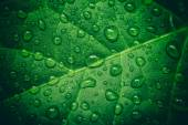 Green leaf with waterdrops after rain — Stock Photo