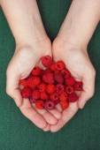 Harvested raspberries in woman palms — Stock Photo