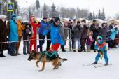 在俄罗斯的滑雪板。伏尔加追求雪橇狗赛跑 2015 — 图库照片