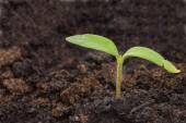 Close up young small green sprout — Stock Photo