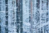 Inside the winter forest — Stock Photo
