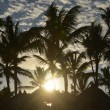 Sunset on the beach with palms — Stock Photo #61569323