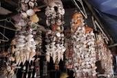 Sea shells in a market — Stock Photo