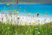Close up of spring flowers with white sandy beach, turquoise water and an island in the background, Luskentyre, Isle of Harris, Hebrides, Scotland. — 图库照片