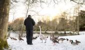 Unrecognisable senior man feeding wild birds , snow covered landscape, Edinburgh, Scotland — Stock Photo