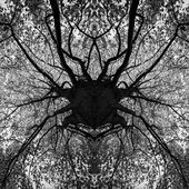 Photo manipulation - tree black and white mandala — Stock Photo