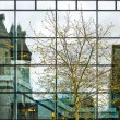 Modern office building exterior with many windows, reflexions and trees — Stock Photo #73035249