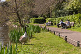 Anonymous families enjoying sunny day off watching wild geese in park — Zdjęcie stockowe