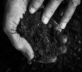 Old woman hands holding fresh soil. Symbol of spring and ecology concept — Stock Photo