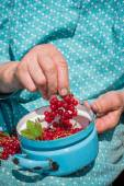 Anonymous senior woman in her garden and homegrown redcurrants — Stock Photo