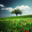 Lonely tree on meadow — Stock Photo #63829765