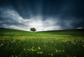 Tree on hilly meadows — Stock Photo