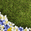 Spring or summer border background — Stock Photo #65575979