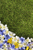 Spring or summer border background — Stock Photo
