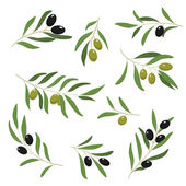 Barevné olivové sady — Stock vektor