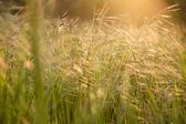 Sunlight in the field — Stock Photo