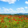 Field with green grass, yellow flowers and red poppies against the blue sky — Stock Photo #61995515
