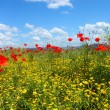 Field with green grass, yellow flowers and red poppies against the blue sky — Stock Photo #61995519