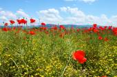 Field with green grass, yellow flowers and red poppies against the blue sky — Stock Photo