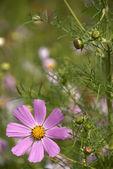 Flower lives — Stock Photo