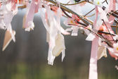 Spring tree in blossom with wedding decoration — Stock Photo
