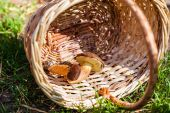 Two mushrooms in basket — Stock Photo