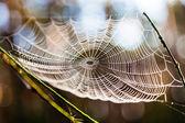 Spiderweb in forest  — Stock Photo