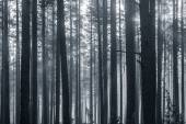 Trees in black and white — Stock Photo