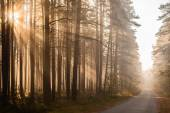 Forest road in the morning — Stock Photo