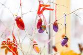 Colorful acorns — Stock Photo