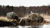 Rocks in the river — Stock Photo