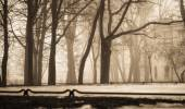 City Park in winter fog — Stock Photo