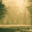 City Park in the fog — Stock Photo #70055977