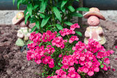 Flowerbed with little flowers and garden figurines — Stock Photo