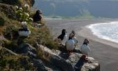 Puffins on the cliffs — Stock Photo