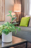 Plants in white ceramic vase in living room — Foto de Stock