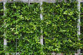 Wall green leaf on the steel frame with net — 图库照片