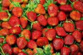 Fresh strawberry fruit from the farm ,northern of Thailand - January 2015 — Stock Photo