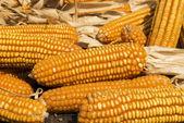 Dried corn on wooden cart thai Style ,Thailand — Stock Photo