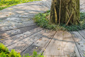 Decoration footpath and grass in the garden. — Stockfoto