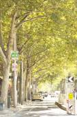 Green road and bus stop city of melbourne — Foto de Stock